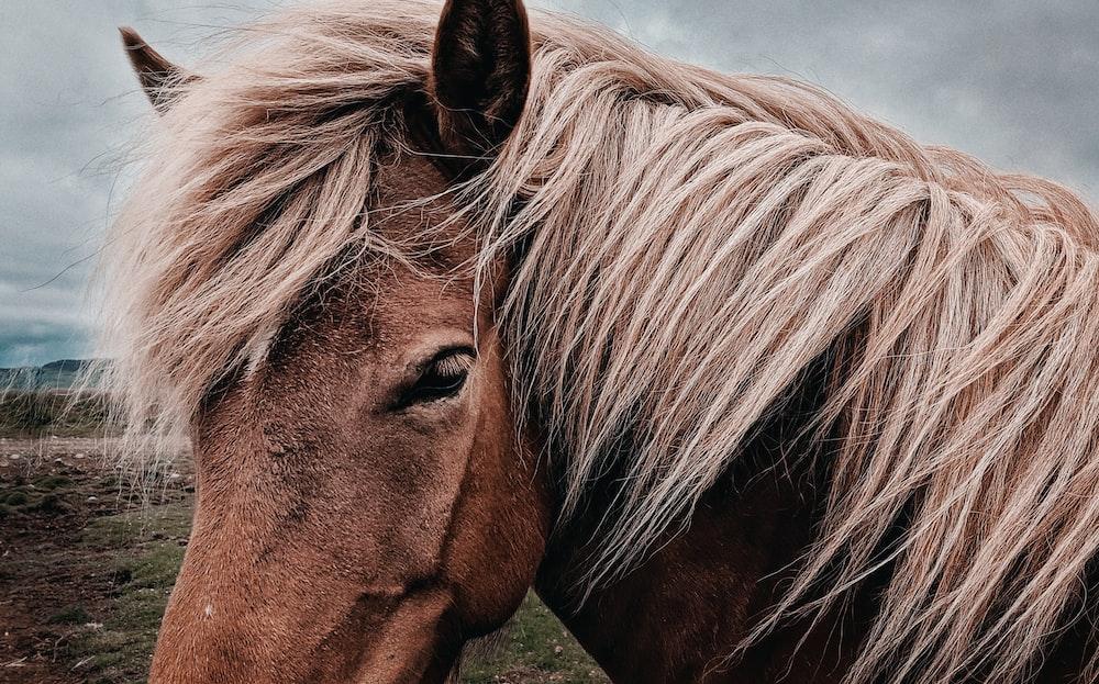 brown horse facing sideways