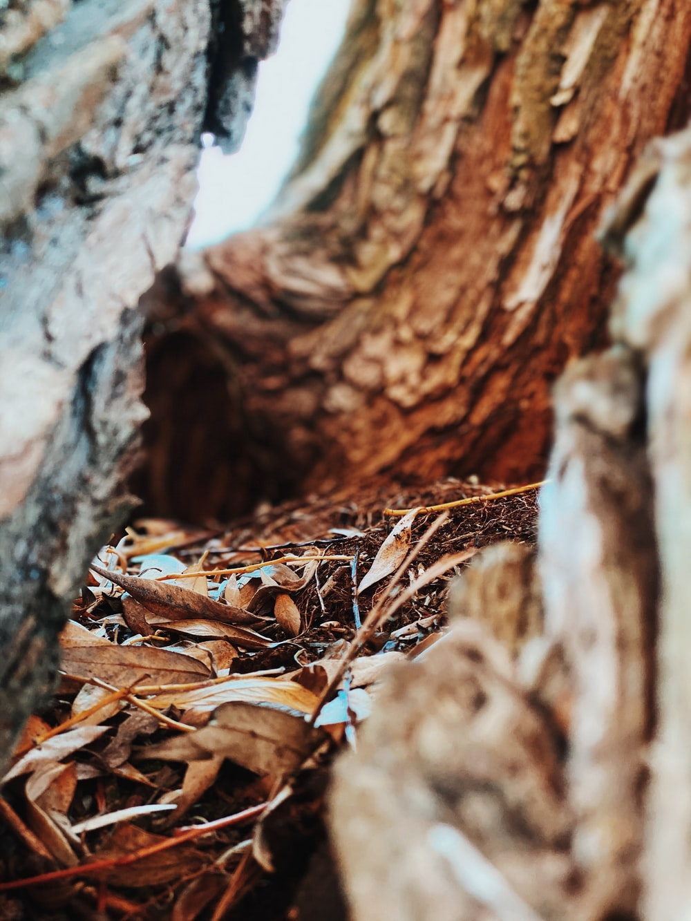 withered leaves inside wood cut