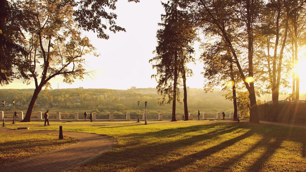 landscape field under golden hour