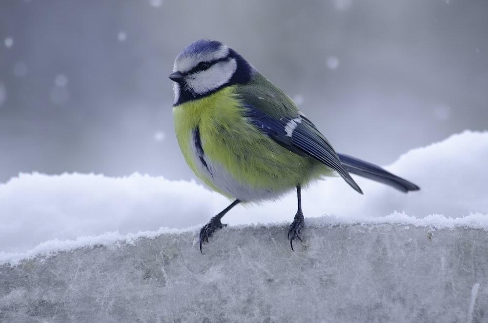 yellow and green bird