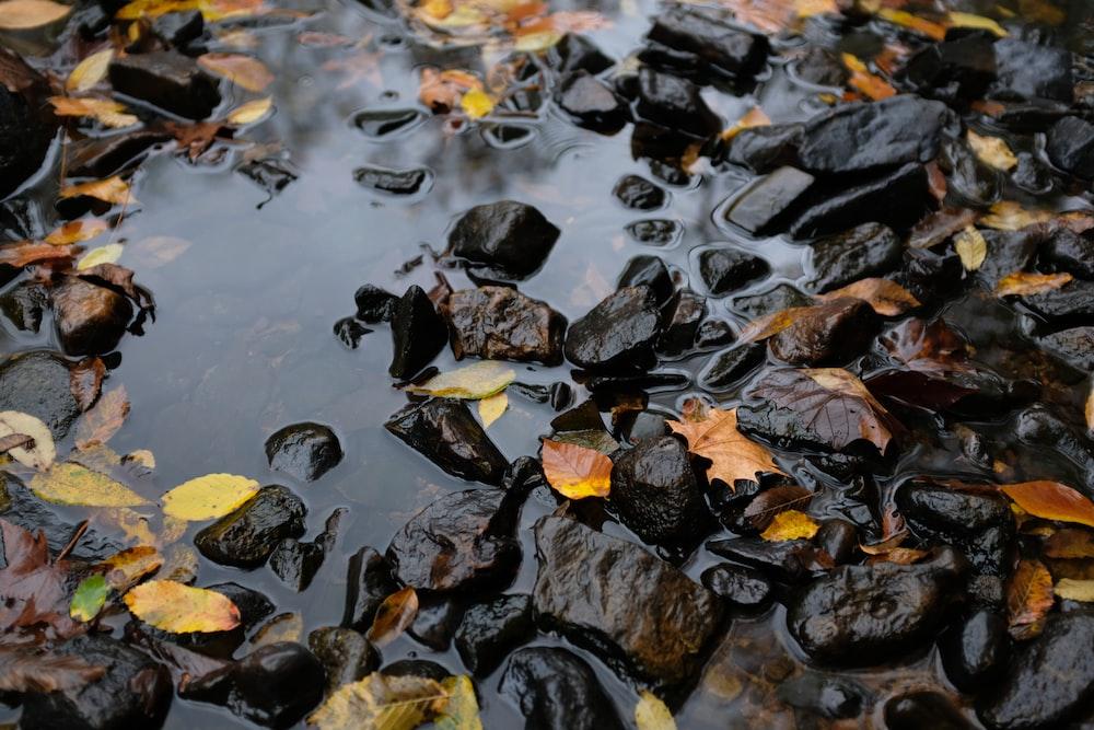 black pebbles and brown dried leaf