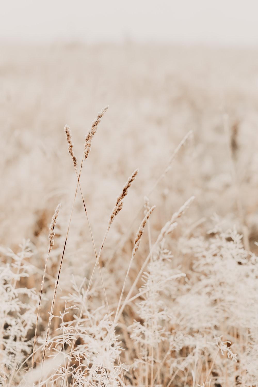 grass field close up photo