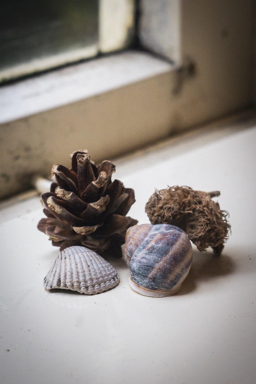 four shells beside window