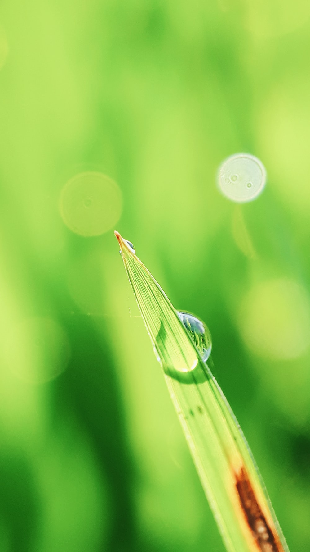 selective focus photography of dew drop on green leaf