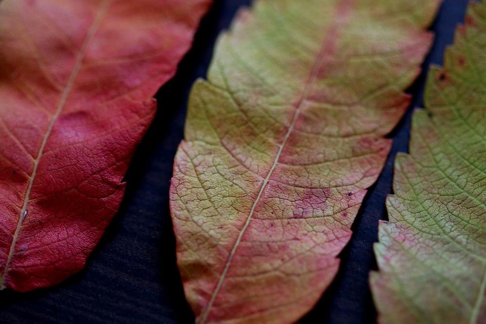 three green and orange leaves