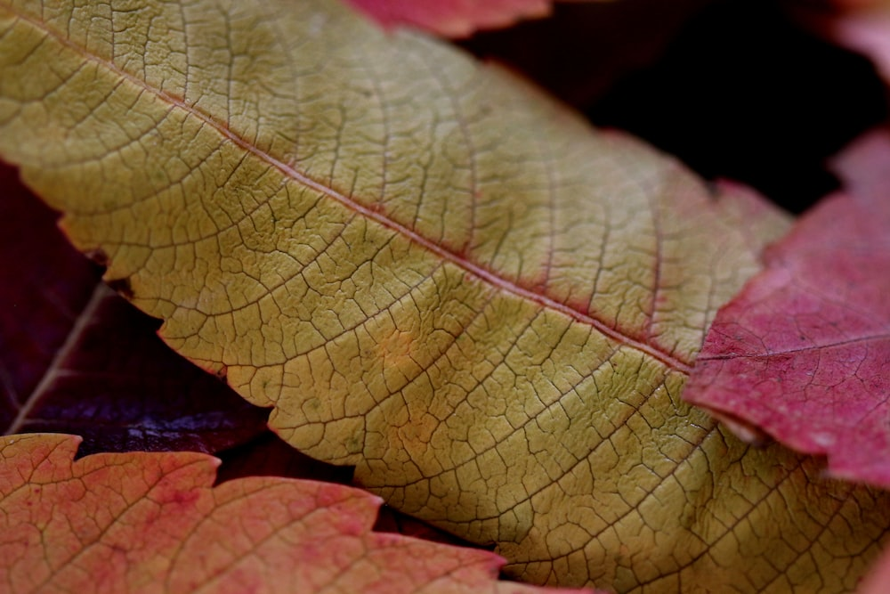 close-up photo of green and red leaf