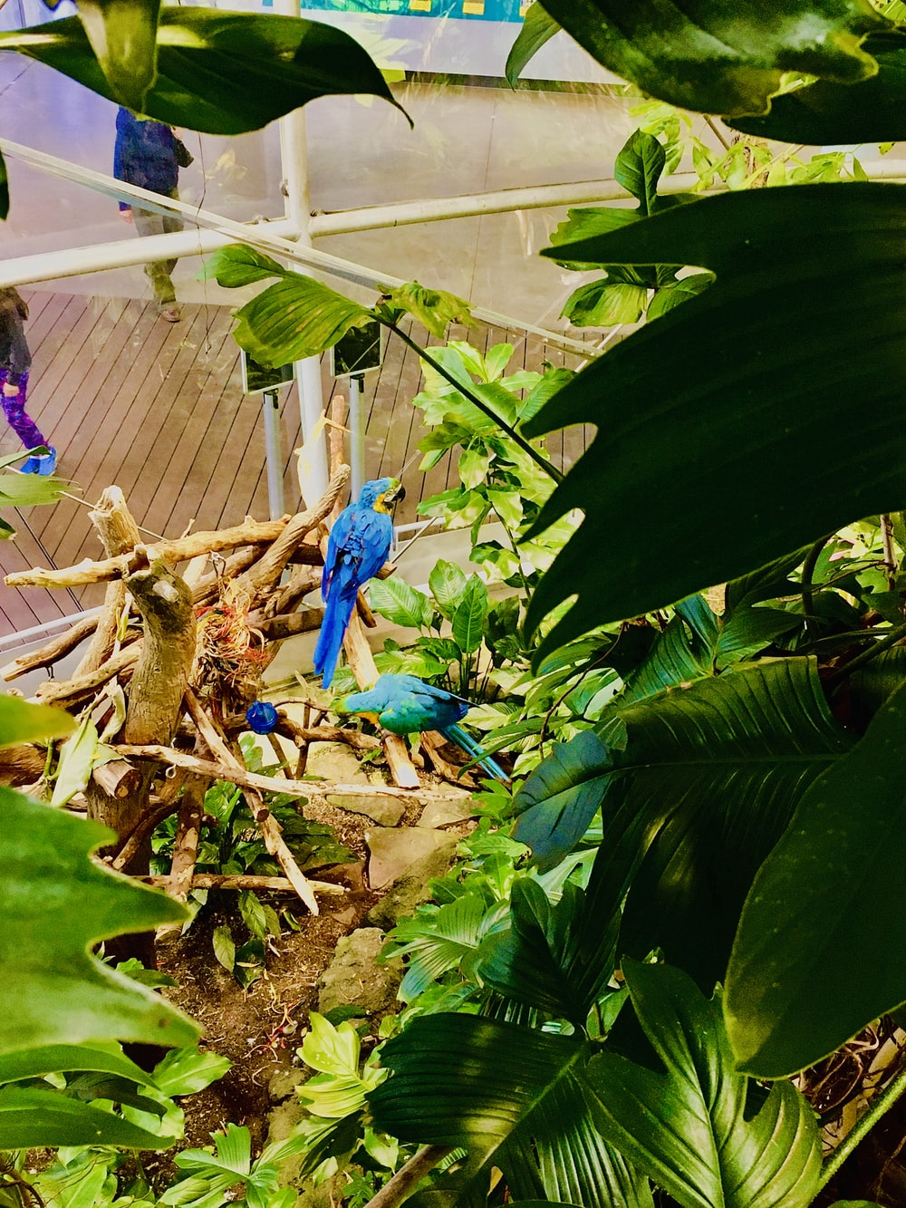 two blue birds perch on branch of tree