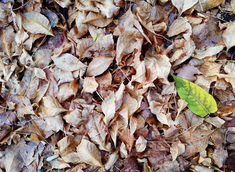 dried leaf lot