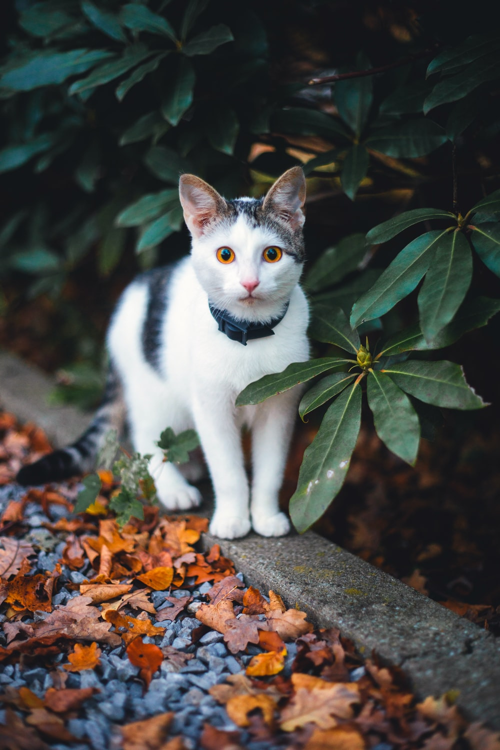 white and black cat standing beside green-leafed plant