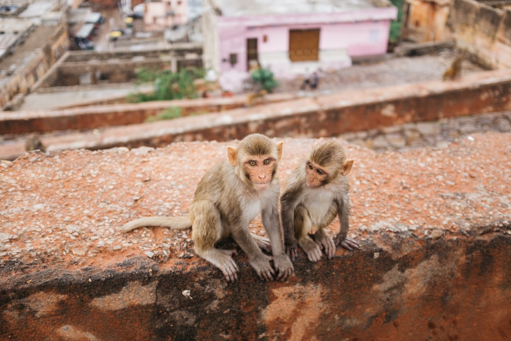 two primates on brown road