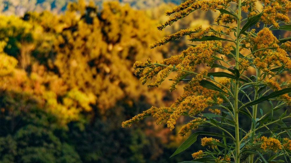 photo of yellow flowers