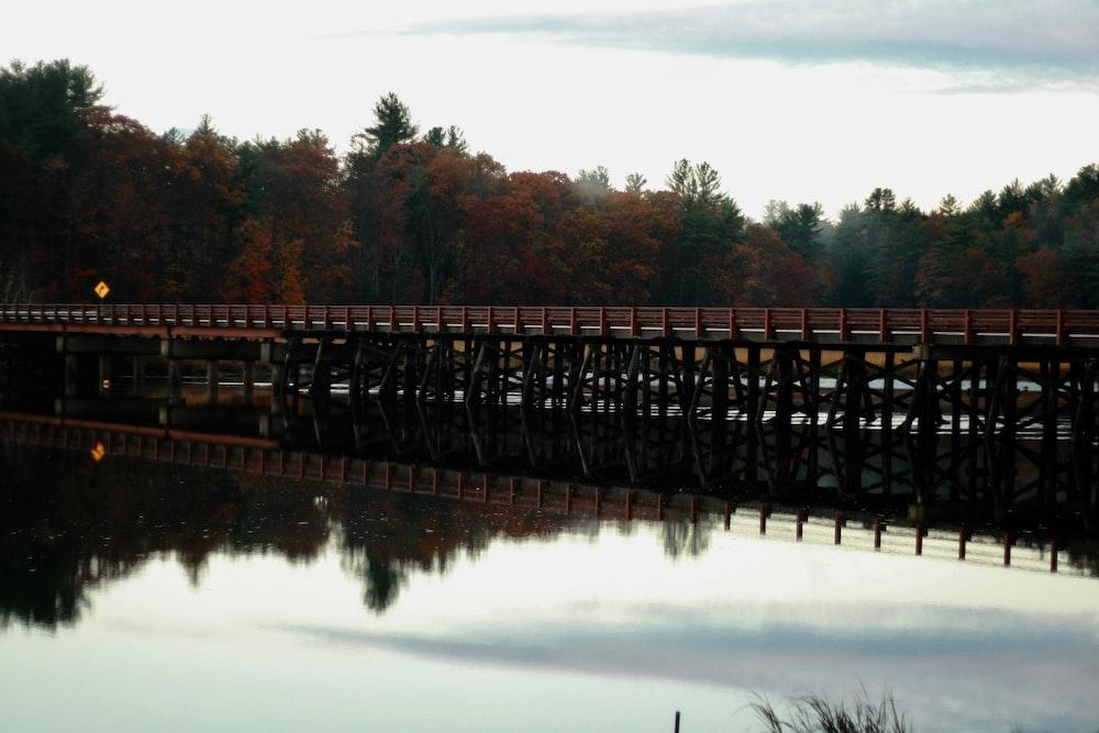 brown wooden ocean dock