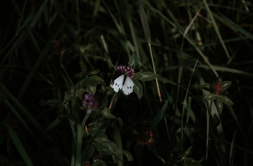 white butterfly on flowers