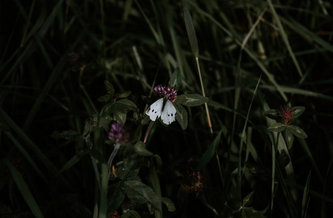 Butterfly in dark grass
