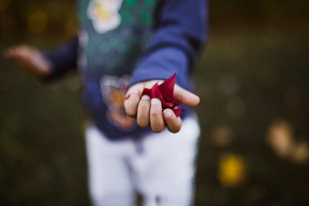 boy holding red petals