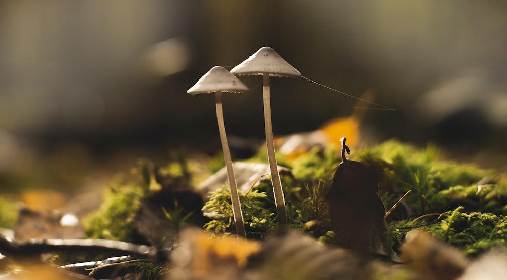 macro photography of gray-and-white mushrooms