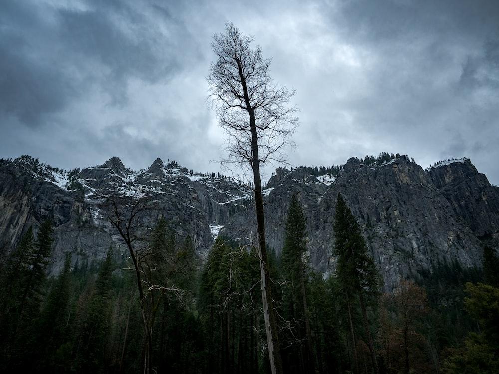 tree near mountain