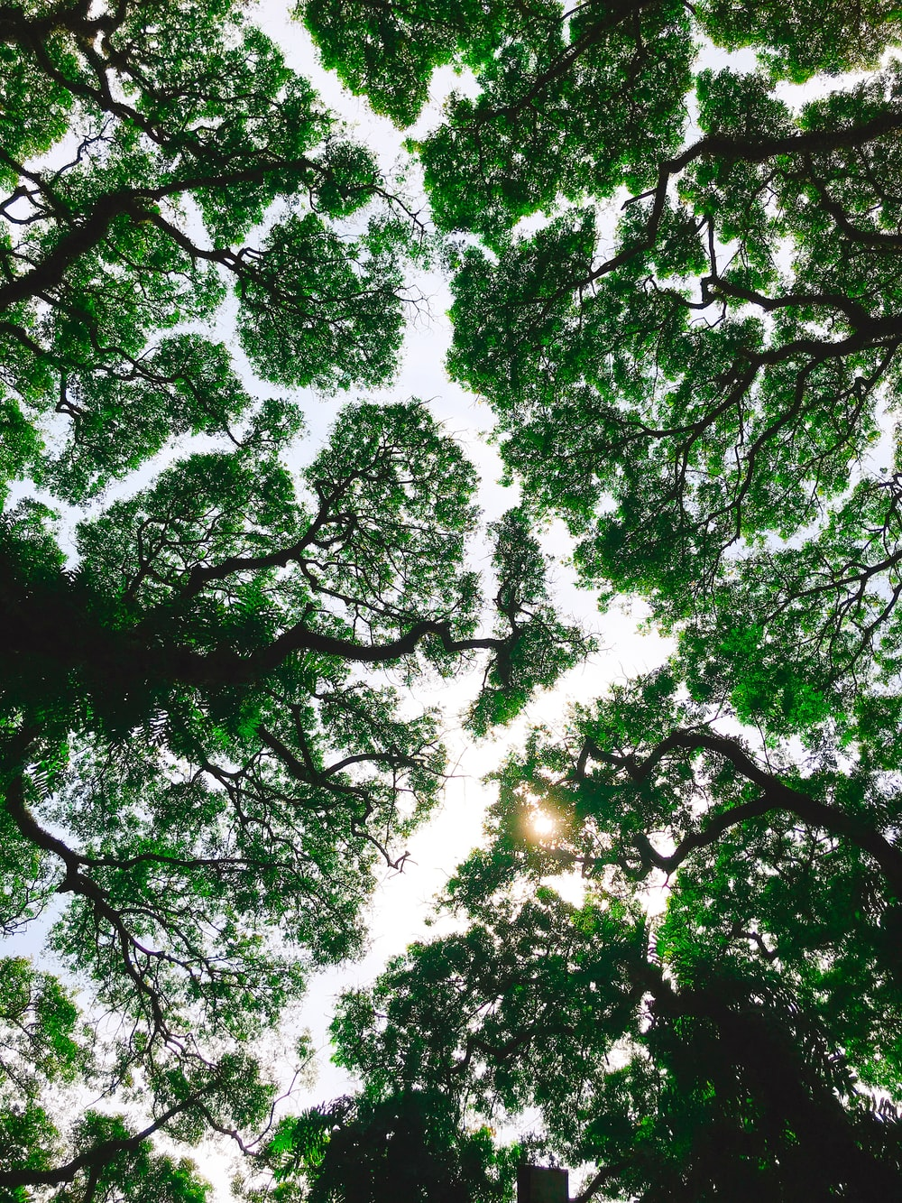low-angle photo of green trees