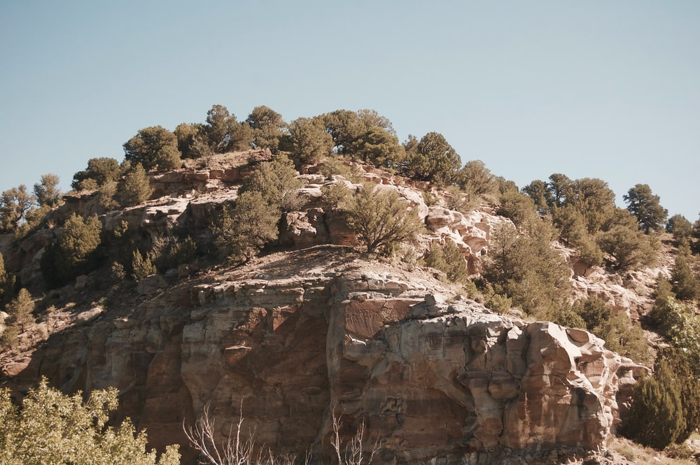 green trees and rock formation