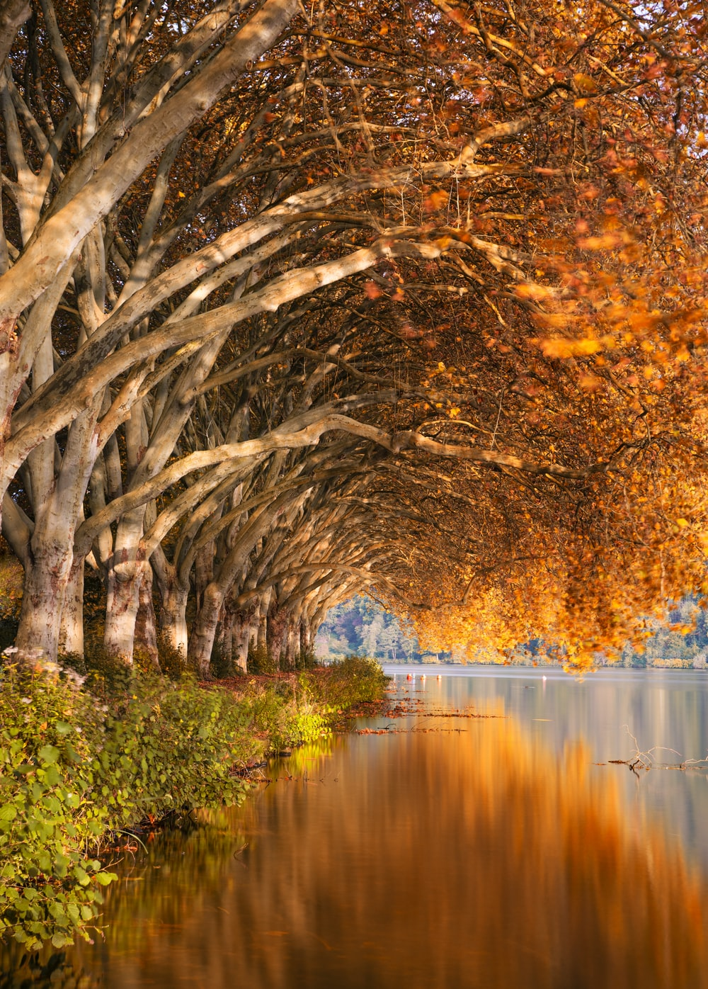 brown leaf trees near body of water
