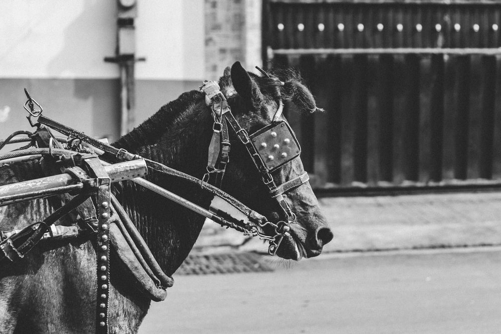 grsycale photograpy of horse