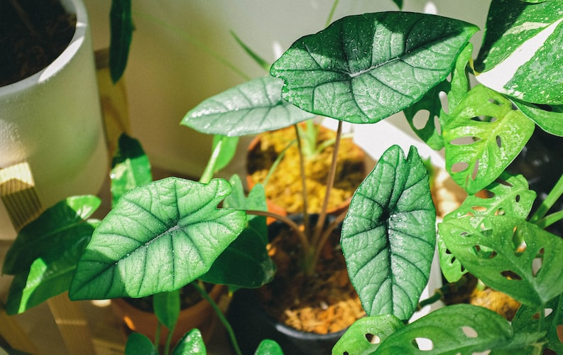 Tropical plant leaves absorbing the sunlight