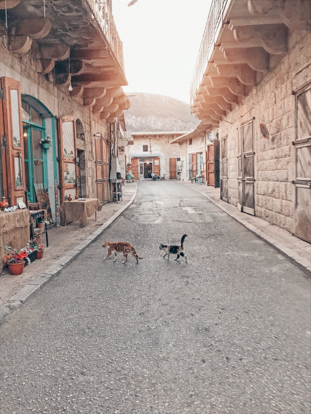 Old vintage souk with 2 cats in lebanese village