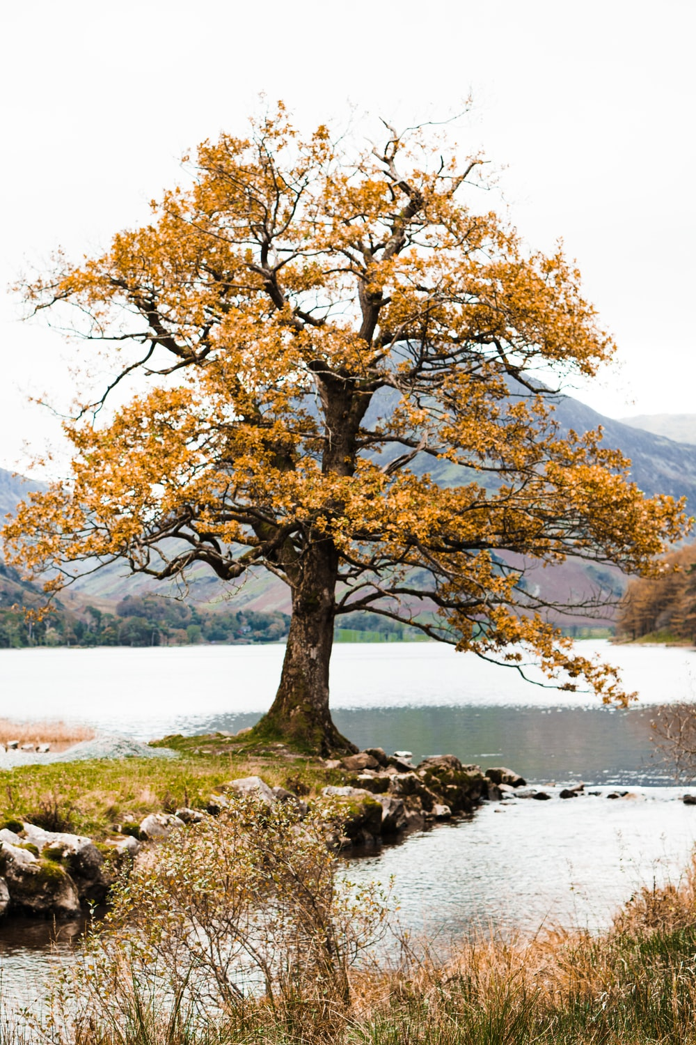 yellow-leafed tree