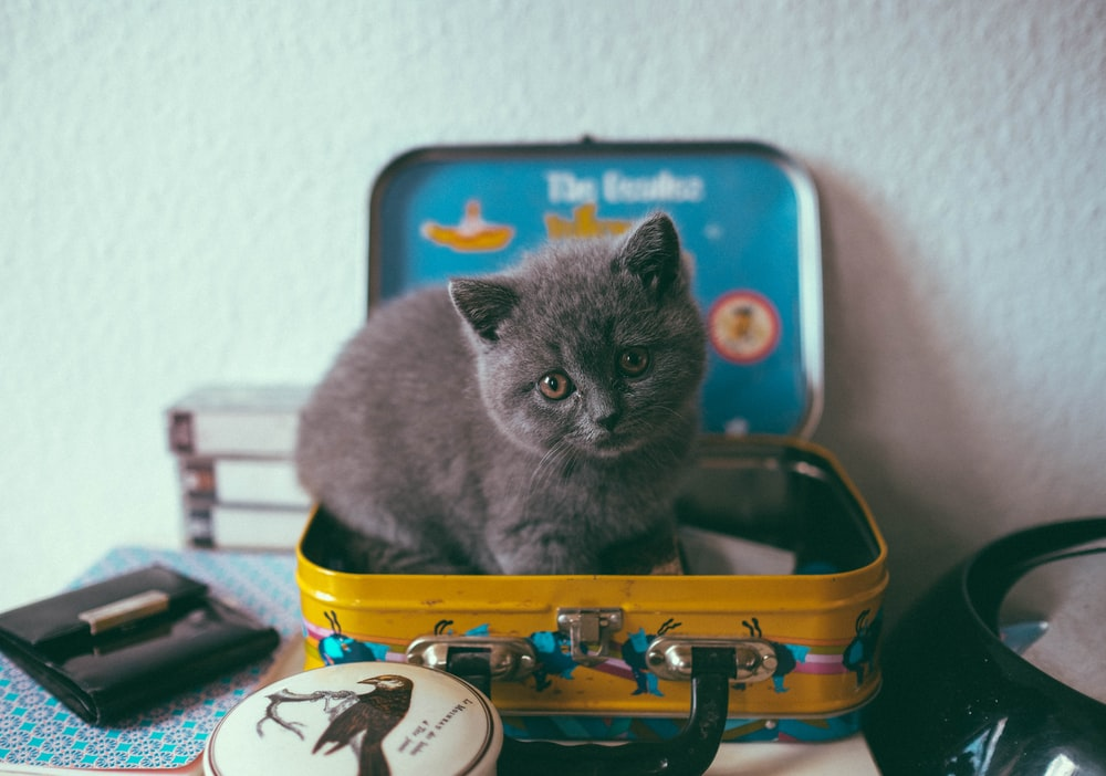 black cat on top of luggage