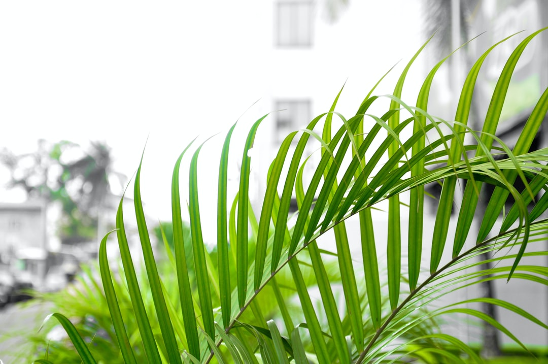Little Palm Leaves