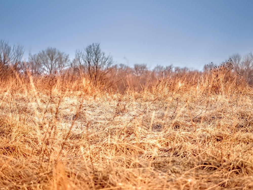 brown grass field scnery