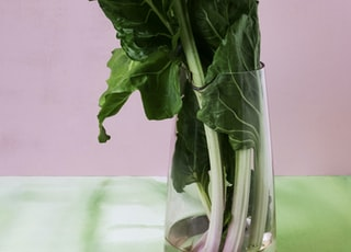 bunch of green leafy vegetable in a clear glass vase