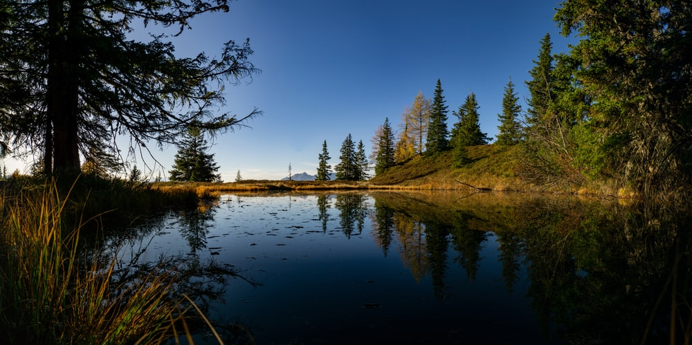 calm body of water surrounded by trees