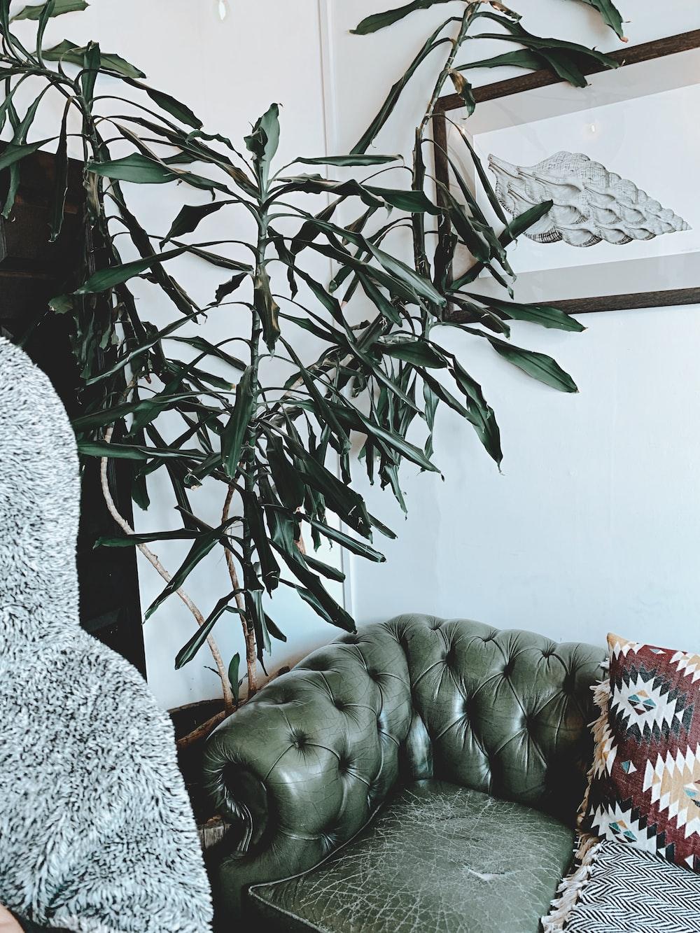 tufted green sofa near wall