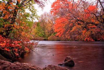 calm body of water in between of trees