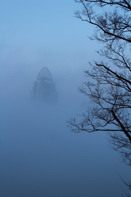 foggy bare trees