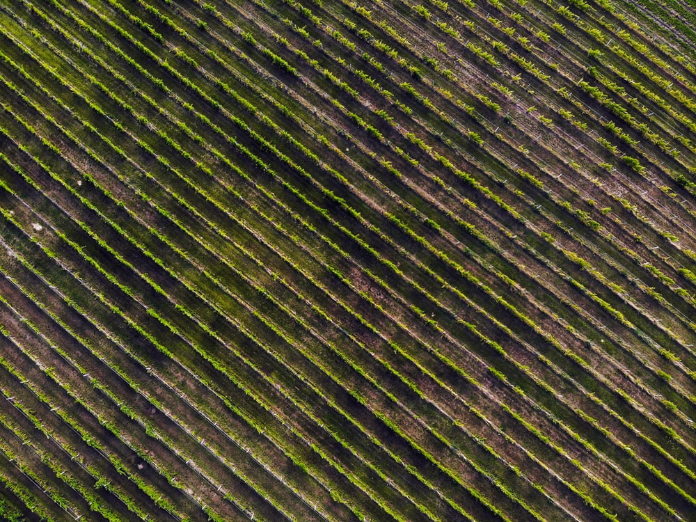 aerial photography of green leafed vegetable farm