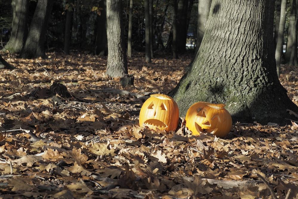 pumpkin décor