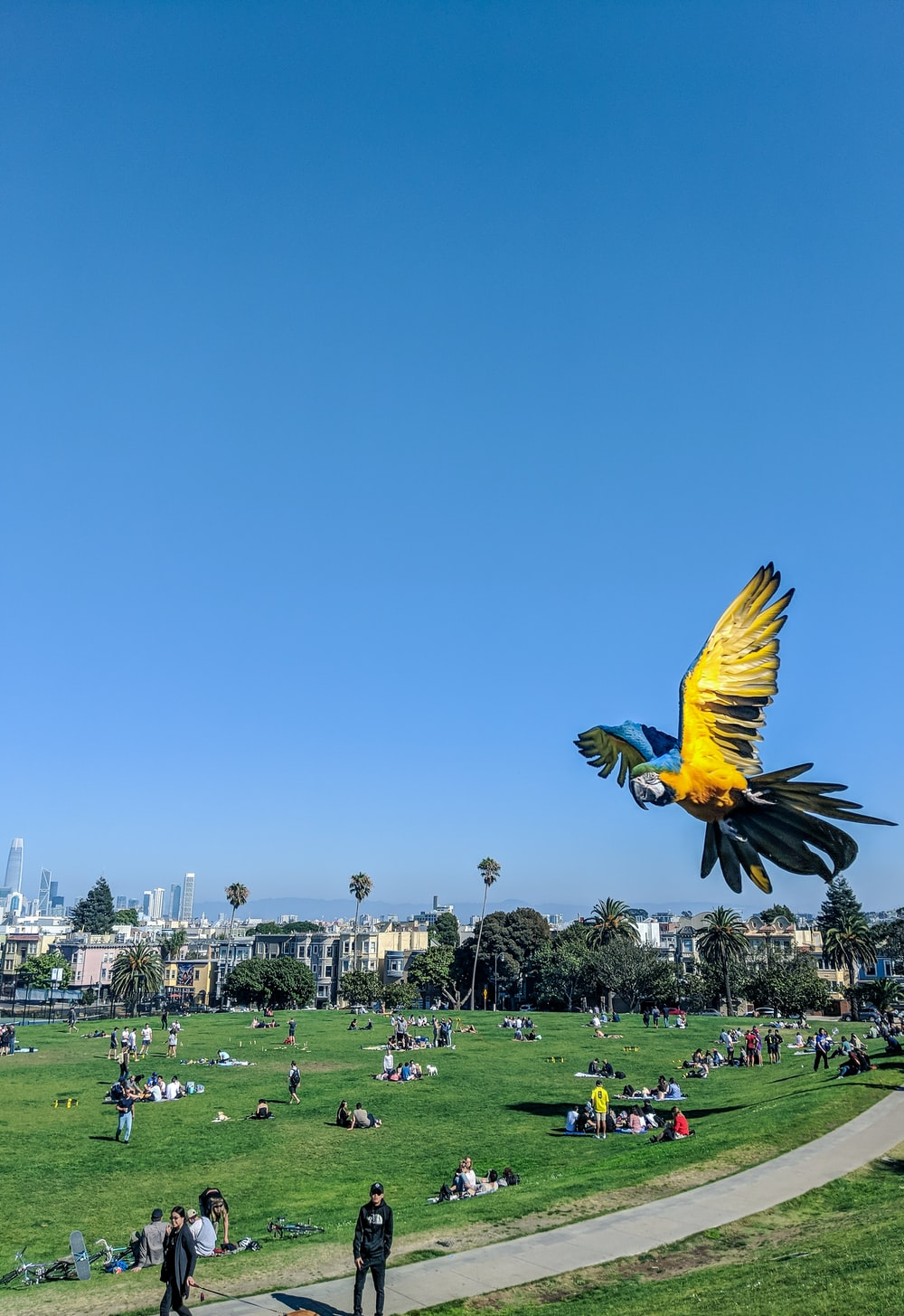 yellow and blue bird at flight