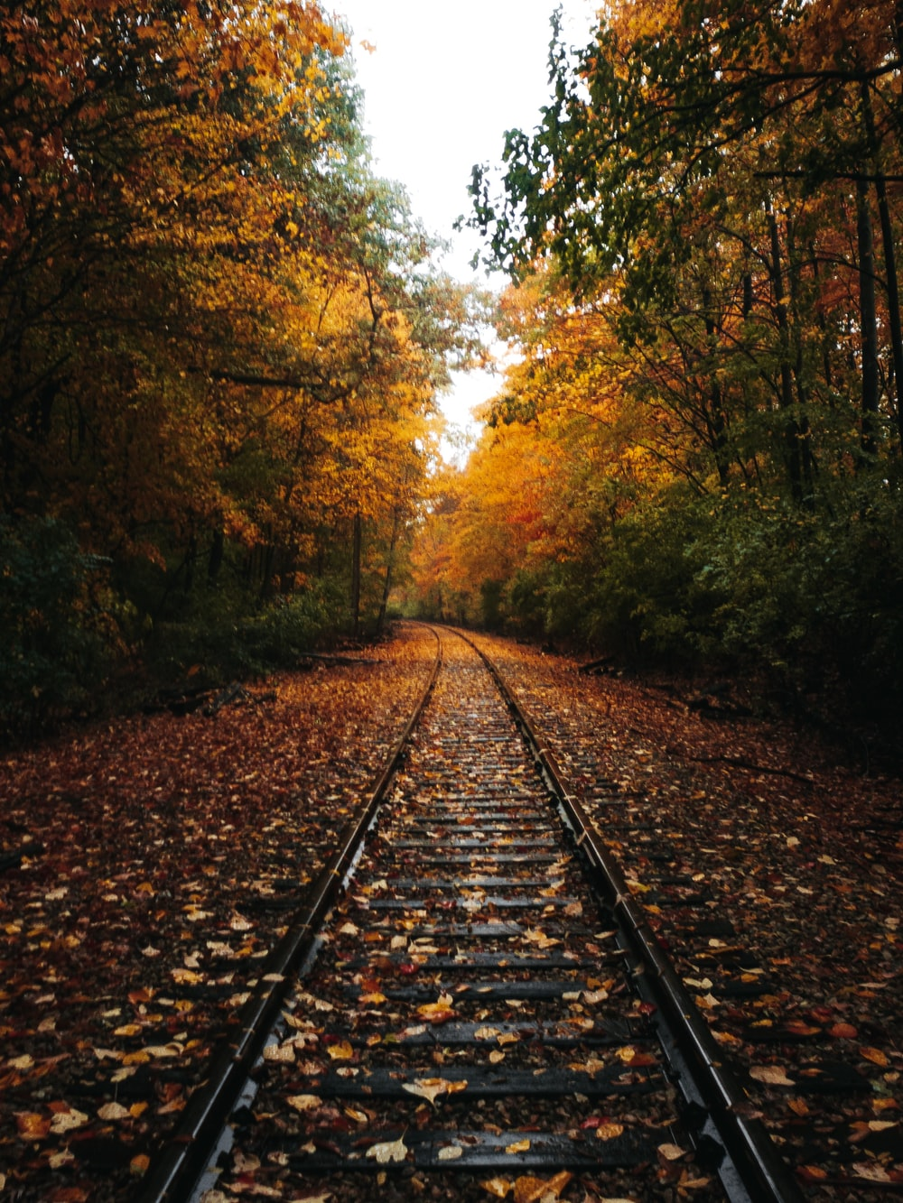 dried leaves on railroad in between of trees