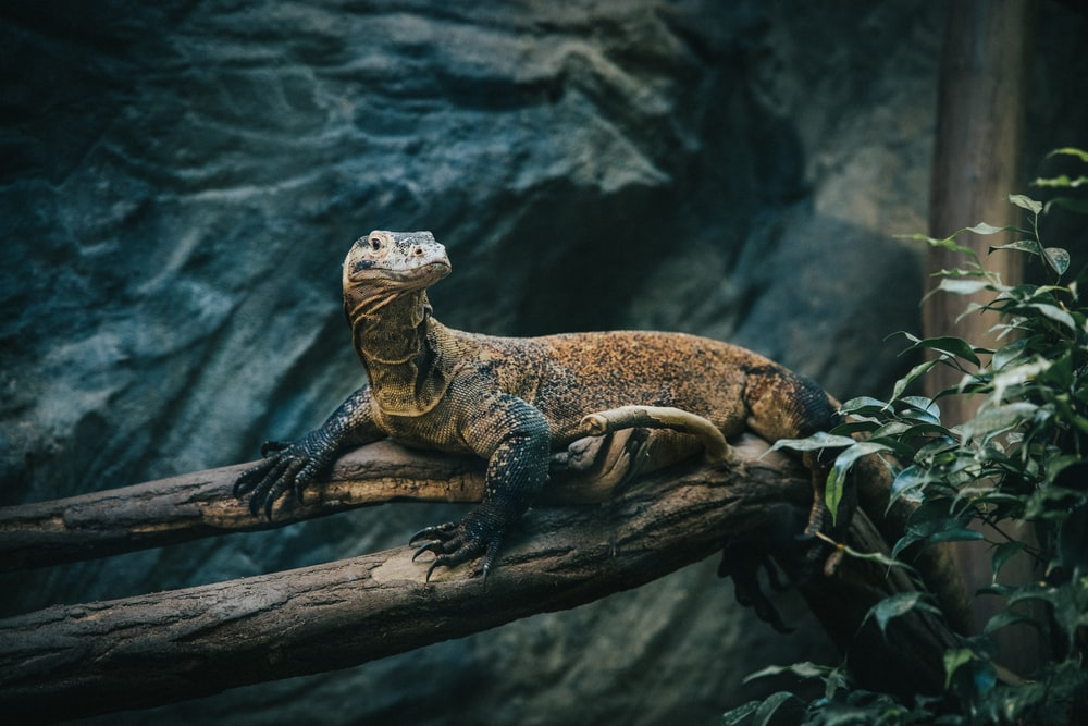 brown reptile on branch