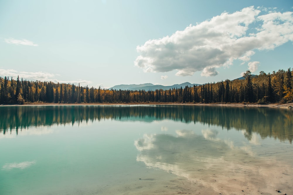 landscape photography of reflection of trees on body of water
