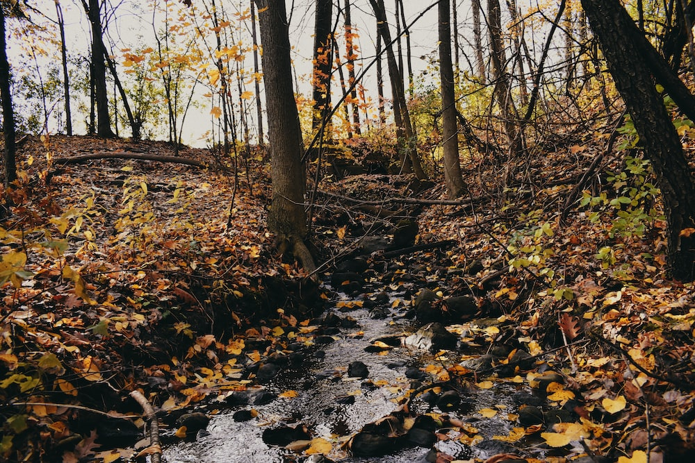 stream a forest during daytime