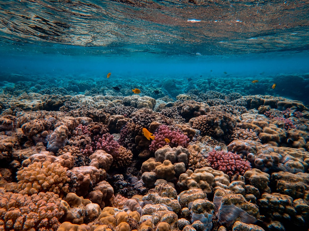 corals under water