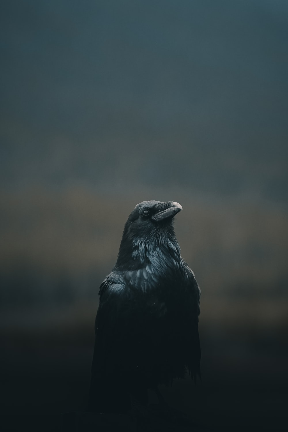 black bird close up photography