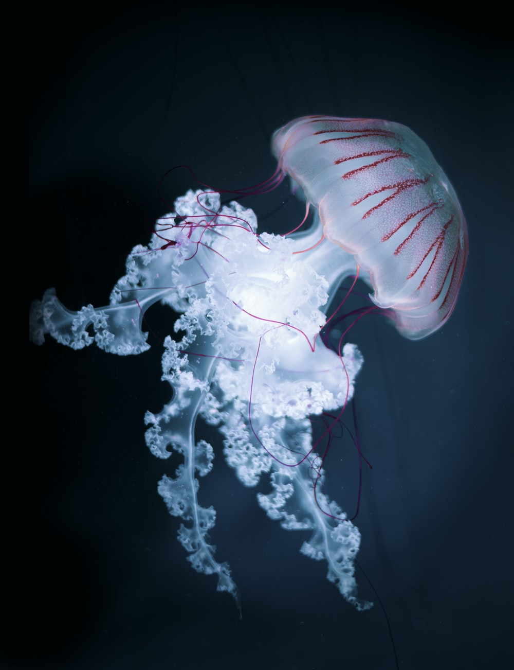 white and pink jelly fish
