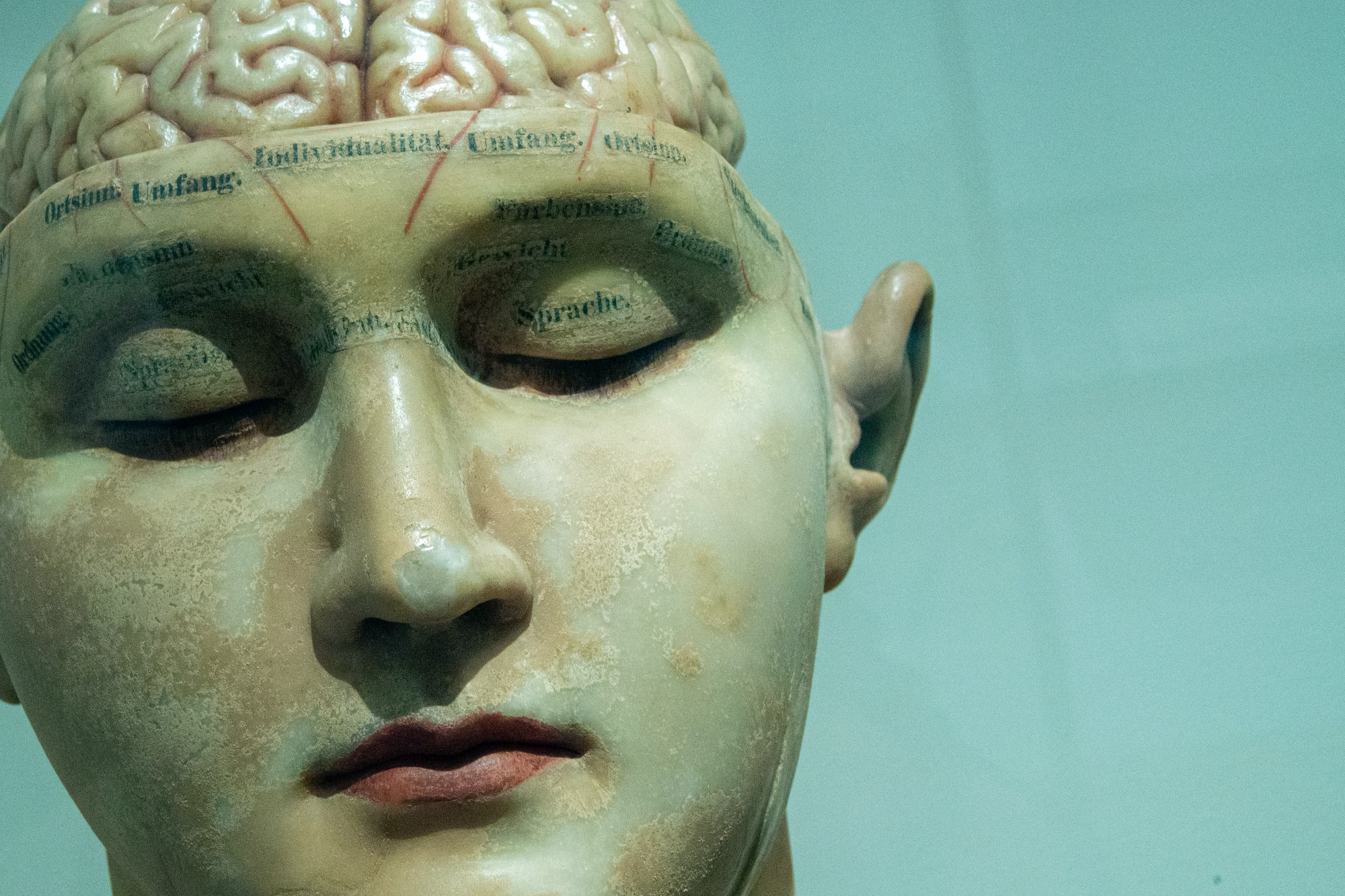Brain model early 20th century.