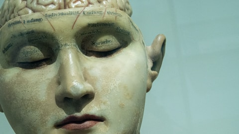 human anatomy model