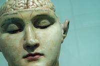 """Brain model early 20th century."""