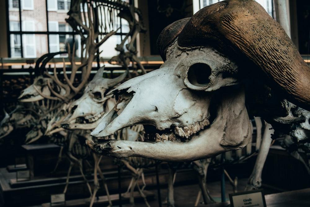 animal skeleton